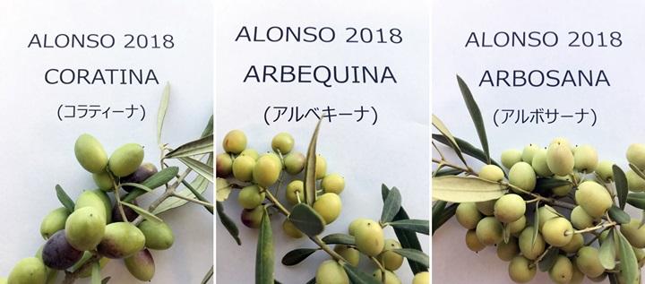 アロンソ品種